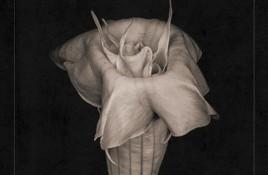 Silver Ghost Shimmer finally lands 10-track debut album 'Soft Landing'