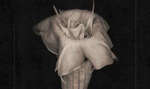 Silver Ghost Shimmer finally lands 10-track debut album'Soft Landing'