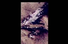 Ghost Painted Sky – Flightless