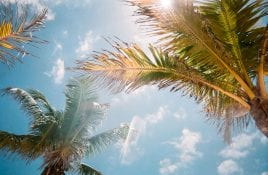 Tips to go to study in Florida