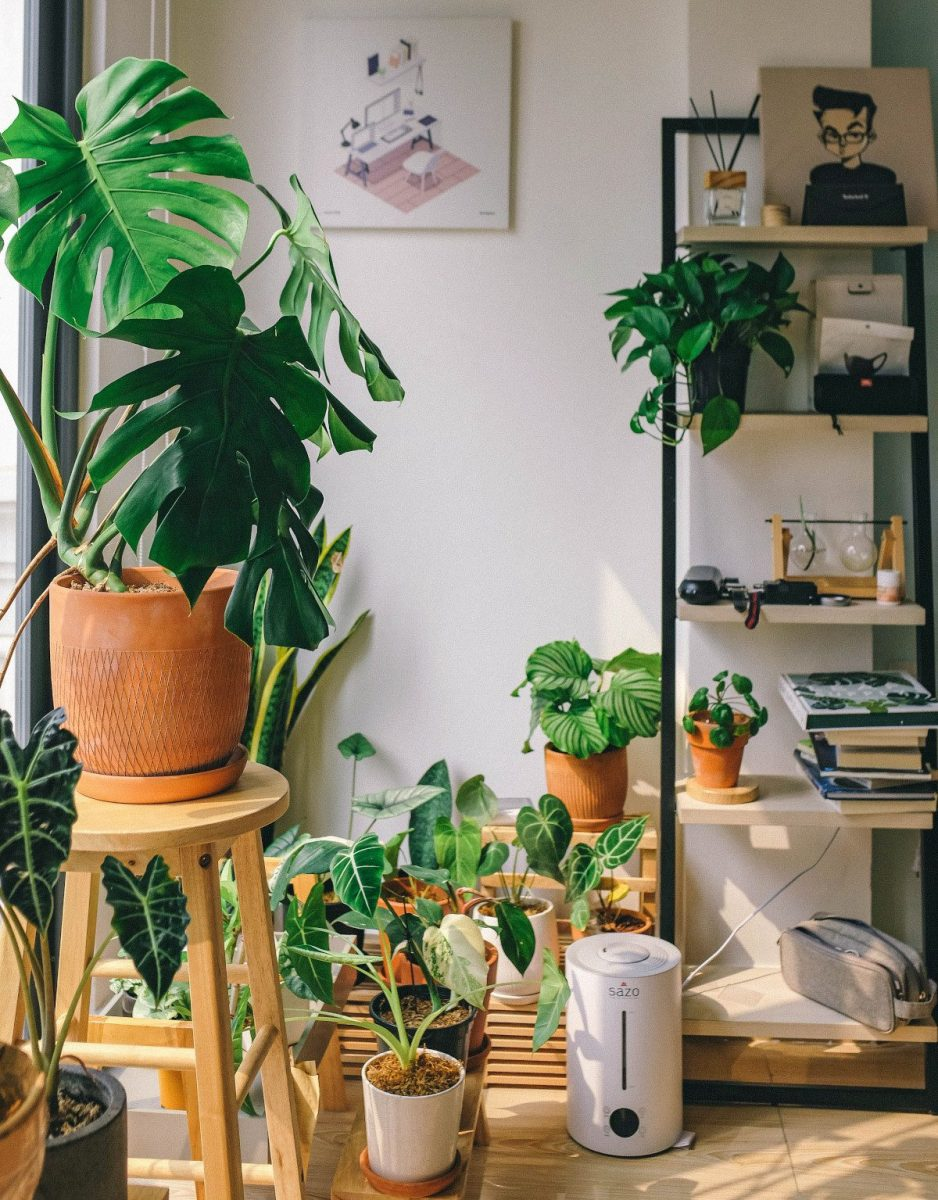Decorating With Indoor Plants - Tips For Choosing The Ideal Design