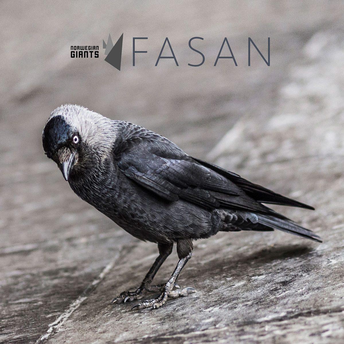 Norwegian Giants - Fasan